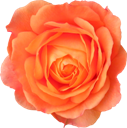 flower-127x128