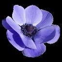 flower-128x128
