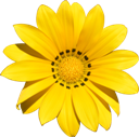 yellow-flower-128x127